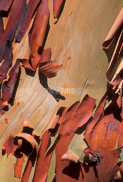 Madrone (Arbutus menziesii) tree bark.