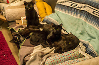 Kttens that were rescued in New York seen on Monday, May 27, 2013 in the Lower East Side neighborhood of New York.  (© Frances M. Roberts)