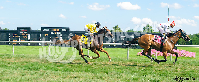 Truly Bound winning at Delaware Park on 8/11/16
