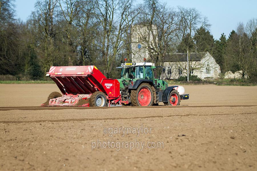 Potato planting into destoned beds with Grimme four row trailed offest planter - March, Norfolk