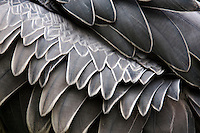 Feather Patterns