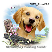 Howard, REALISTIC ANIMALS, REALISTISCHE TIERE, ANIMALES REALISTICOS, paintings+++++Golden retriever,GBHRPROV216,#a#, EVERYDAY ,selfies