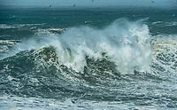 Gulls & Wave
