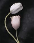 lk flower 2.tif
