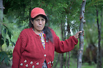 Gloria Ventura and some of the trees she has planted in Buena Vista Bacchuc, a small Mam-speaking Maya village in Comitancillo, Guatemala. She is part of a women's group that shares gardening, animal raising and reforestation, and is assisted by the Maya Mam Association for Investigation and Development (AMMID).