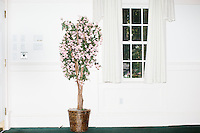"""A potted tree with pink petals stands at the edge of the room where Republican presidential candidate Bobby Jindal speaks to people gathered at his """"Believe Again"""" campaign event at the Governor's Inn and Restaurant in Rochester, New Hampshire. Jindal is campaigning in New Hampshire in advance of the 2016 Republican presidential primary there."""
