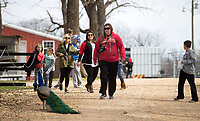 NWA Democrat-Gazette/JASON IVESTER<br /> Visitors explore the grounds Wednesday, March 15, 2017, at the Wild Wilderness Drive Through Safari in Gentry.
