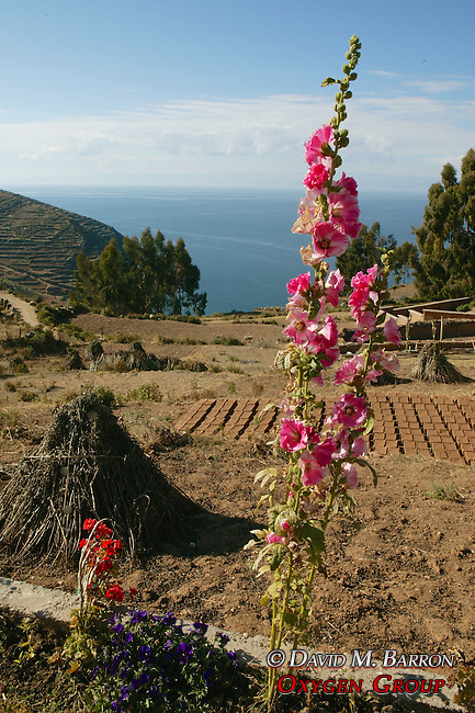 Isla Del Sol And Flower