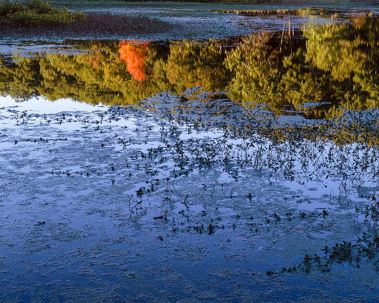 Evening light on a wetland along Argyle Lake at Argyle Lake State Park; McDonough County, IL