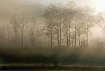 Sunlight and Fog
