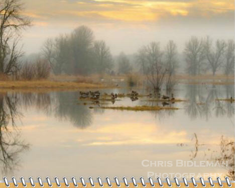 "November of the 2012 Birds of a Feather Calendar.  The photo is called ""Lazy afternoon in the refuge. and shows reflections of the bare trees and cloudy, colored sky is seen in the mirror surface of a lake with Canada Geese and Trumpeter Swans resting in Winter in the Ridgefield National Wildlife Refuge."