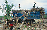 Philippines. Negros Island. Province of Negros Occidental, located in the  Western Visayas region. Barangay (village) Moises Padilla. Sugar cane fields. Workers carry on their heads harvested sugar canes and load them on a truck. © 1999 Didier Ruef