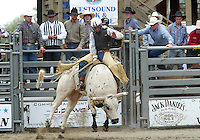 28 August, 2005: Bonner Bolton riding the bull Mud Pack holds on during the Extreme Bulls competition Sunday at the Kitsap County Fair Grounds, Bolton was not able to hang on for the mandatory 8 seconds.