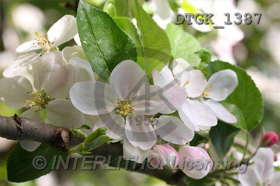 Gisela, FLOWERS, photos(DTGK1387,#F#) Blumen, flores, retrato