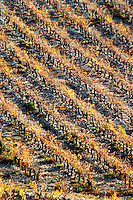 La Clape. Languedoc. Vineyard. France. Europe. Graphic diagonal rows of vines.
