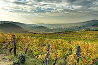 France, Saône-et-Loire (71), région du Beaujolais, Chasselas, le vignoble en automne et le village // France, Saone et Loire, Beaujolais region, Chasselas, the vineyards and the village in autumn