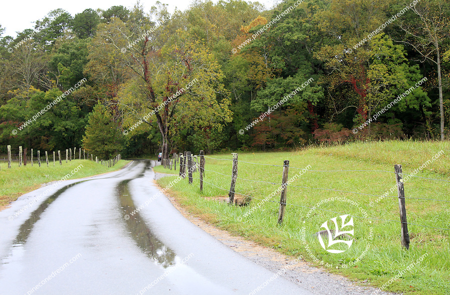 Fenced wet loop road passing through cades cove valley in autumn in the great smoky mountains national park.