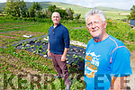 Noel Spillane (front right) showing the new open area of the Aunascaul Allotments on Sunday, pictured with Gene Finn who owns the land.