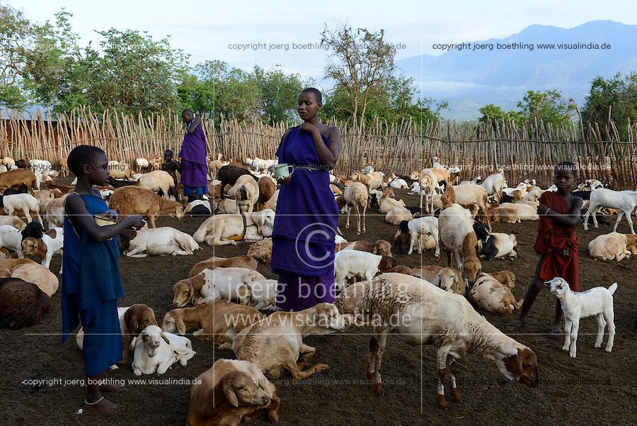 TANZANIA, Korogwe, Massai in Kwalukonge village, goats in fenced Kral / TANSANIA, Korogwe, Massai im Dorf Kwalukonge, Ziegen im Gatter