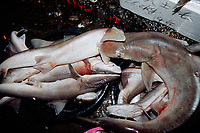 assorted sharks for sale at the morning fish market in Keelung, Taiwan