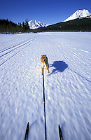 Skijoring on Bear Lake.  Seward, Alaska.