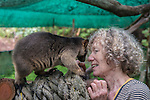 Margit Cianelli wildlife carer and real life Doctor Doolittle takes care of a baby tree kangaroo/s by feeding them, bringing them to her jungle gym for exercise, putting them inside her blouse like a mum tree kangaroo would in her pouch.