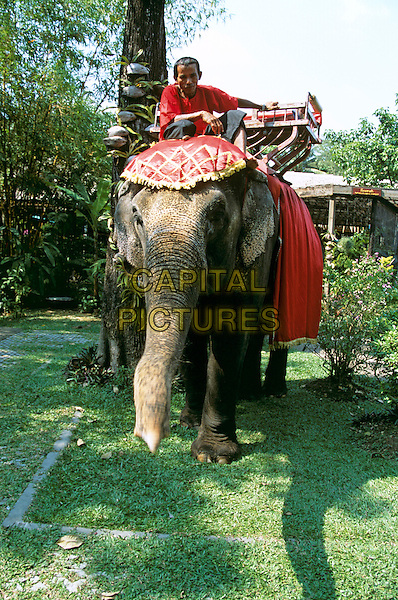 Elephant and mahout, Riverside Rose Garden, Sampran, Nakorn Pathom, near Bangkok, Thailand