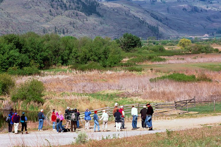 Osoyoos Oxbows Fish and Wildlife Management Area (Ecological Reserve) near Osoyoos, South Okanagan Valley, BC, British Columbia, Canada - Bird Watchers on Field Trip