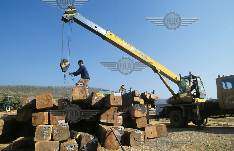 Hardwood teak is loaded onto a truck in a timber yard near the border with Myanmar (Burma), where the wood was illegally logged..