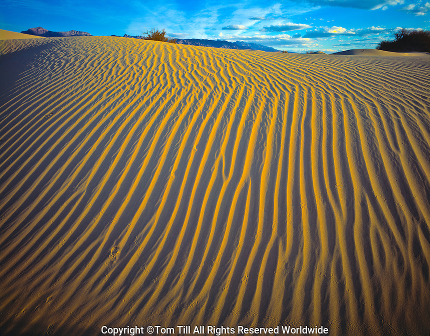Sand dune patterns  Death Valley National Park, California  Mesquite Flat Dunes  Sunset  March