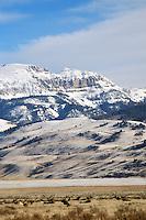 herd, bull, elk, national elk refuge, Jackson, hole, wyoming, sleep indian, mountain