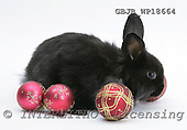 Kim, CHRISTMAS ANIMALS, photos, GBJBWP18664,#XA# stickers