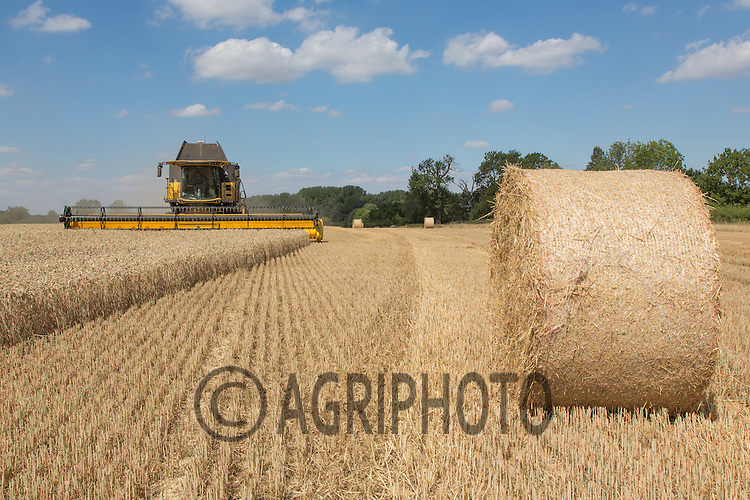 Round bales of wheat straw with a combine harvesting wheat<br /> Picture Tim Scrivener 07850 303986<br /> &hellip;.Covering agriculture in the UK&hellip;.