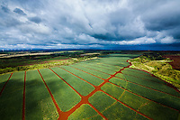 An aerial view of pineapple fields, with windmills in the distance, O'ahu.