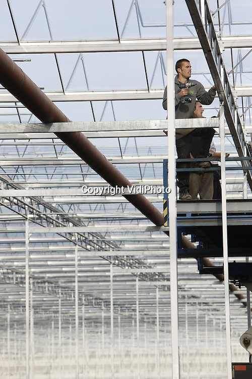 Foto: VidiPhoto<br /> <br /> ZUILICHEM - In Zuilichem in de Bommelerwaard bouwt de piepjonge ondernemer Koen Kreling (22) op dit moment de grootste chrystantenkas van ons land. Het complex van 12 ha. groot krijgt bovendien de eerste oogstrobot ter wereld. Daarmee wordt het salaris van acht werknemers bespaard. Het automatisch oogstsysteem is zelf bedacht en vervolgens gepantenteerd. Eind januari worden de eerste plantjes geplaatst en half april worden de eerste troschrysanten geoogst. In twee oogstrondes zijn dat 35 miljoen stelen per jaar. Naar troschrysanten is op dit moment veel vraag. Het kassencomplex vergt een investering van 25 miljoen euro. Hoofdaannemer is Van Amersfoort uit Raamdonksveer. Koen Kreling brengt zijn product straks onder de naam Diamond Flowers op de markt. Het enorme complex telt straks slechts 20 werknemers.