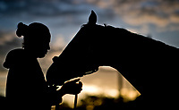 LOUISVILLE, KENTUCKY - MAY 03: A horse gets a bath at sunrise during Kentucky Derby and Oaks preparations at Churchill Downs on May 3, 2017 in Louisville, Kentucky. (Photo by Scott Serio/Eclipse Sportswire/Getty Images)