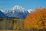Bushes and trees add color to the scene at Moran Junction in Grand Teton National Park.