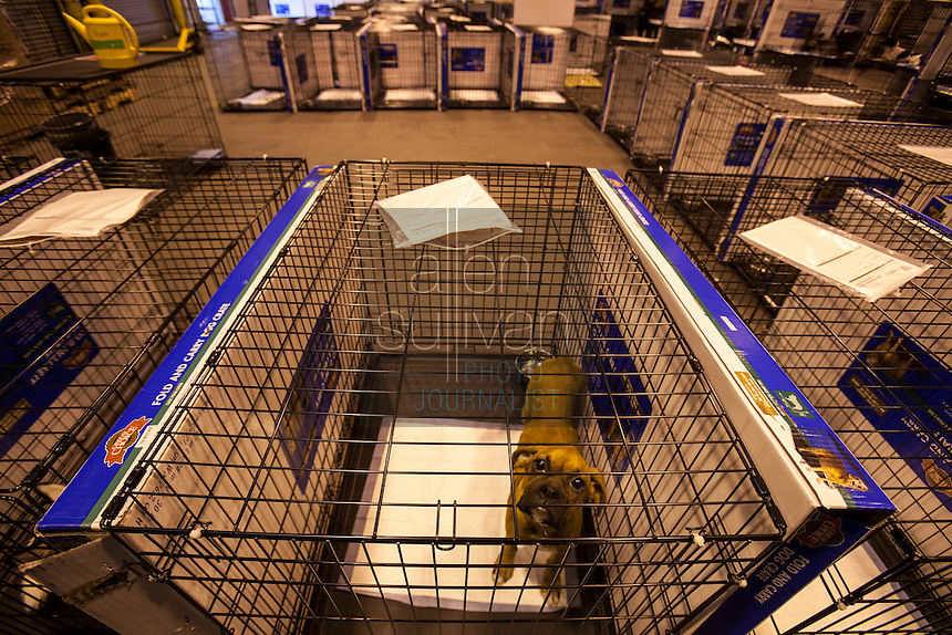 Cages set up to recieve hundreds of animals at a temporary shelter at the Columbia, SC airport after a raid on a puppy mill in Johnston, SC on Tuesday, Sept. 11, 2012. HSUS workers found over 200 dogs, nine horses and 30-40 fowl.