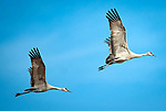 Wildlife: 2018 Sandhill Crane Migration