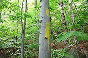 Trail Stewardship, Trail Blazing