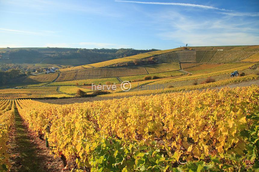 France, Berry, Cher (18), Sancerrois, Bué, le vignoble en automne après les vendanges, le cirque de la Poussie, vigne en A.O.C Sancerre // France, Berry, Cher , Sancerrois, the vineyards in autumn at the Cirque (circus) de la Poussie, vines in A.O.C. Sancerre