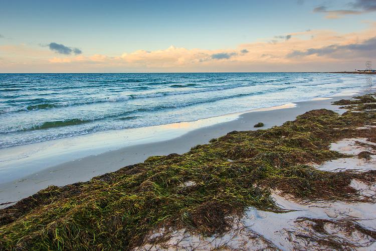Havsvågor vid en sandstrand med uppspolad tång vid Skanör i Skåne