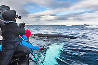 Whales surface in the waters around the Antarctic peninsula.