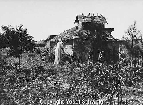 Pastoral view of kibbutz, with woman tending her garden, around a shack, with pigeons on the roof.