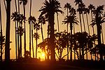 Couple strolliing in Santa Monica's park at sunset.