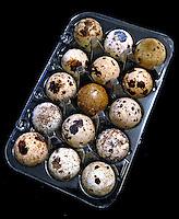 Alimentos, ovo de codorna. Foto de Manuel Lourenço.