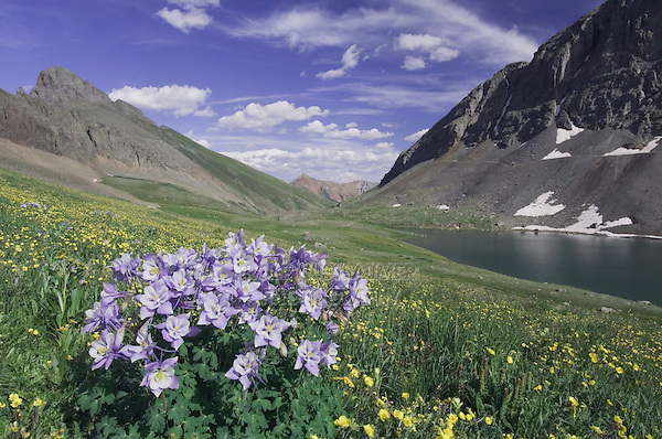 Clear Lake and wildflowers in alpine meadow,Blue Columbine,Colorado Columbine,Aquilegia coerulea, Alpine Avens, Ouray, San Juan Mountains, Rocky Mountains, Colorado, USA, July 2007