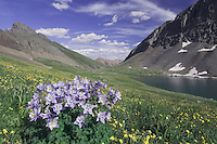 Clear Lake and wildflowers in alpine meadow,Blue Columbine,Colorado Columbine,Aquilegia coerulea, Alpine Avens, Ouray, San Juan Mountains, Rocky Mountains, Colorado, USA, July 2007