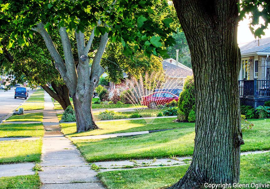 Centennial maple trees along Bright Street