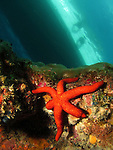 Kenting, Taiwan - Orange starfish underneath a dive boat.